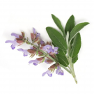 Clary Sage Pure Essential Oil 12ml