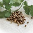 Coriander Seed Pure Essential Oil 12ml
