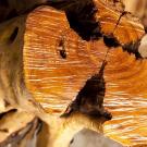 Sandalwood, East Indian Pure Essential Oil 5ml