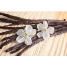 Vanilla Fragrant Oil